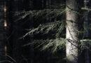 Stadtwald Nossen: Waldbewirtschaftungsplan beschlossen